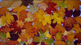 Autumn Leaves Falling royalty-vrije illustratie