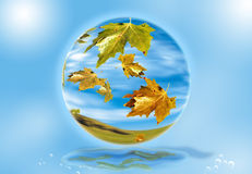 Autumn Leaves falling 2. Leaves falling from a tree inside crystal ball Royalty Free Stock Images