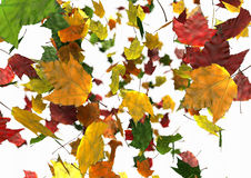 Autumn Leaves Falling Royalty Free Stock Photography