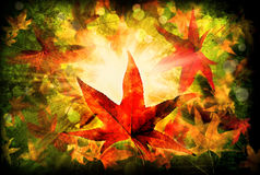 Autumn Leaves Falling Foto de Stock