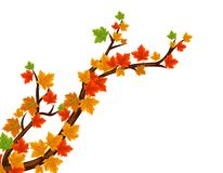 Autumn Leaves In Falling Imagenes de archivo