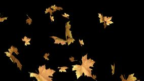 Autumn leaves falling with alpha channel loop clip. Can use this clip for background or overlays on your image, video project.  stock video