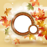 Autumn leaves falling on bright background Royalty Free Stock Photos