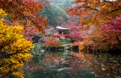 Autumn leaves falling at Daigoji Temple in Kyoto royalty free stock photography