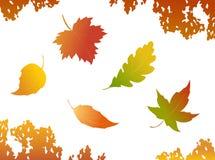 Autumn leaves. Falling autumn leaves - design elements Stock Images