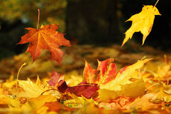 Autumn Leaves Falling Down Stock Photos