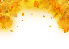 Autumn leaves falling frame Stock Image