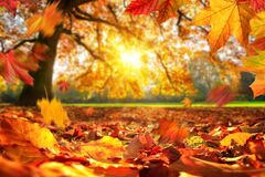 Autumn leaves falling on the ground in a park