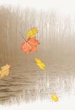 Autumn leaves falling on lake. Colorful Autumnal leaves falling on surface of sepia lake with reflection of trees in background Stock Photo