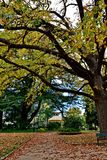 Autumn Leaves Falling In Machattie Park Bathurst. With the band stand on the background Stock Photo