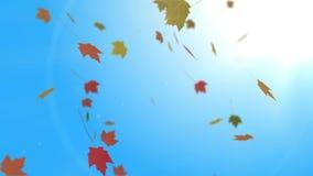 Autumn Leaves Falling no dia bonito da queda video estoque