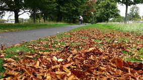 Autumn leaves falling in the park stock footage