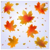 Autumn leaves. Falling autumn leaves and rowan berries on blue sky background Royalty Free Stock Photo
