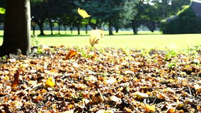 Autumn leaves falling in slow motion stock video