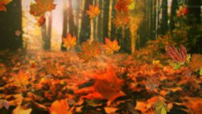 Autumn leaves falling in slow motion and sun shining through fall leaves. Beautiful landscape background stock video