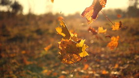 Autumn leaves falling in slow motion and sun shining through fall leaves. Beautiful landscape background.  stock video
