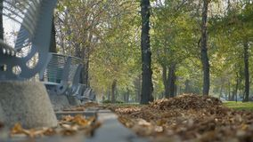 Autumn leaves falling from the trees near benches on a beautiful sunny day in the park -. Autumn leaves falling from the trees near benches on a beautiful sunny stock video footage