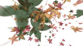 Autumn Leaves Falling (Vortex Animation) stock footage