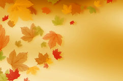 Autumn leaves falling. royalty free stock photo