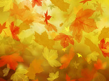 Autumn leaves falling. Royalty Free Stock Images