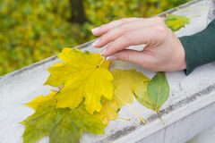 Autumn leaves in a female hand Stock Photos