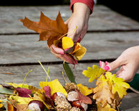 Autumn leaves in female hands Stock Photos