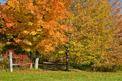 Autumn leaves and fence. Colorful autumn trees with bright yellow and orange leaves near a country fence Stock Image