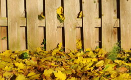 Autumn leaves and fence Royalty Free Stock Image
