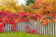 Autumn leaves on fence Royalty Free Stock Photos
