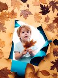 Autumn Leaves Festival Concepto de la forma de vida de la niñez de la familia lema o producto PUBLICIDAD DE DIGITAL Agencia de pu imagenes de archivo