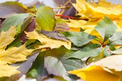 Autumn Leaves Fin vers le haut Photographie stock libre de droits