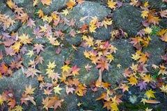 Autumn Leaves on Flagstones Stock Photo