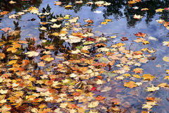 Autumn Leaves Floating Stock Photography