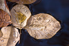 Autumn leaves floating Royalty Free Stock Photography