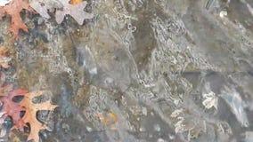 Autumn Leaves Floating & het Schommelen op Meerkust stock video