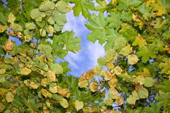 Autumn leaves floating in the sky Stock Photography
