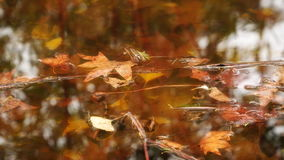 Autumn leaves floating in the water stock video