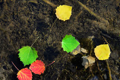 Autumn leaves floating on water Stock Photography