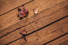 Autumn leaves on floorboard. High angle view of autumn leaves on floorboard Stock Images