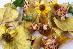 Autumn leaves and flowers. Autumn leaves, and flowers suitable for background Royalty Free Stock Photography