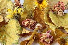 Autumn leaves and flowers. Autumn leaves, and flowers suitable for background Stock Photo