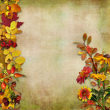 Autumn leaves, flowers and berries on a vintage background Stock Images