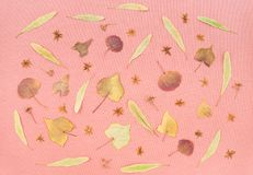 Autumn leaves and flowers on pastel pink background. Nature inspiration royalty free stock photos