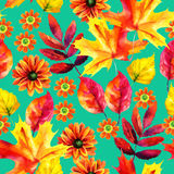Autumn leaves and flowers watercolor seamless pattern. Autumn watercolor seamless pattern with autumn leaves and flowers on bright background. Hand painted fall Royalty Free Stock Photos