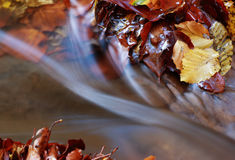 Autumn leaves and flowing water Royalty Free Stock Photos