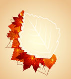 Autumn leaves. Flying autumn leaves background with space for text Stock Images