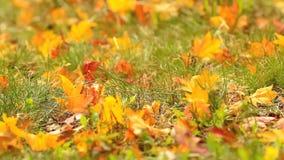 Autumn leaves. stock footage
