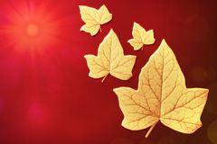Autumn leaves flying to the sun Stock Photos