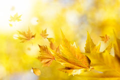 Autumn leaves flying to sun. Golden autumn leaves flying to the sunset sun with the wind Royalty Free Stock Photo