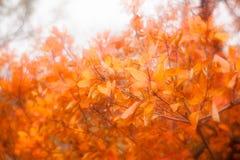 Autumn leaves fog Stock Photos